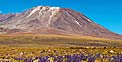Volcano in the Altiplano