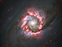 Rose of star formation around distant supermassive black hole