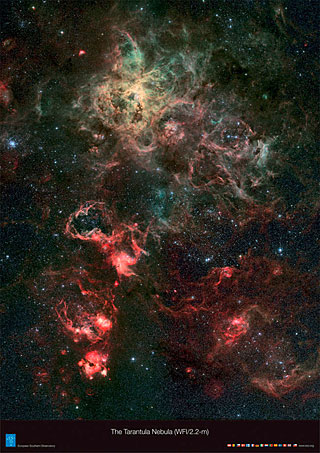 Poster: The Tarantula Nebula